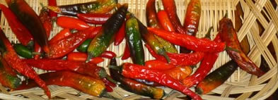 Drying Chili